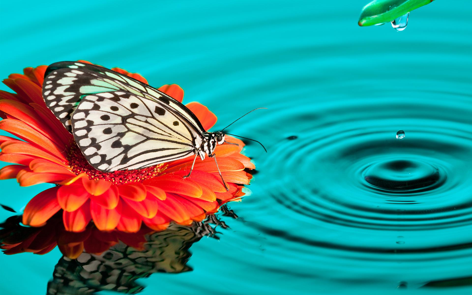 butterfly_drops-wide