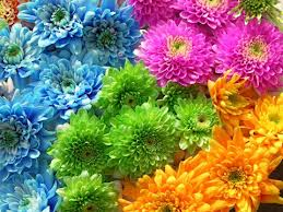 Bitkilere Renk Veren Sistem
