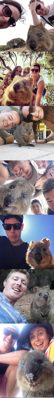 kuakko selfisi Avustralya - ryuklemobi