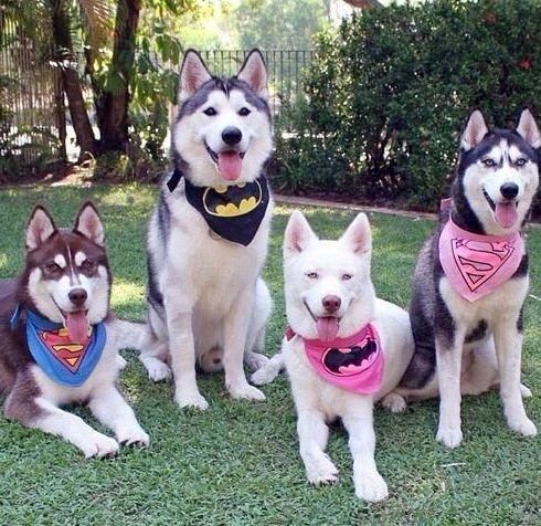 süper köpekler - ryuklemobi