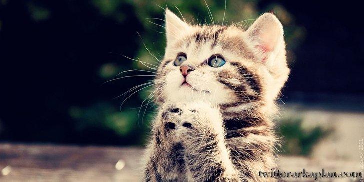 Cute-Cat - Kopya - ressim