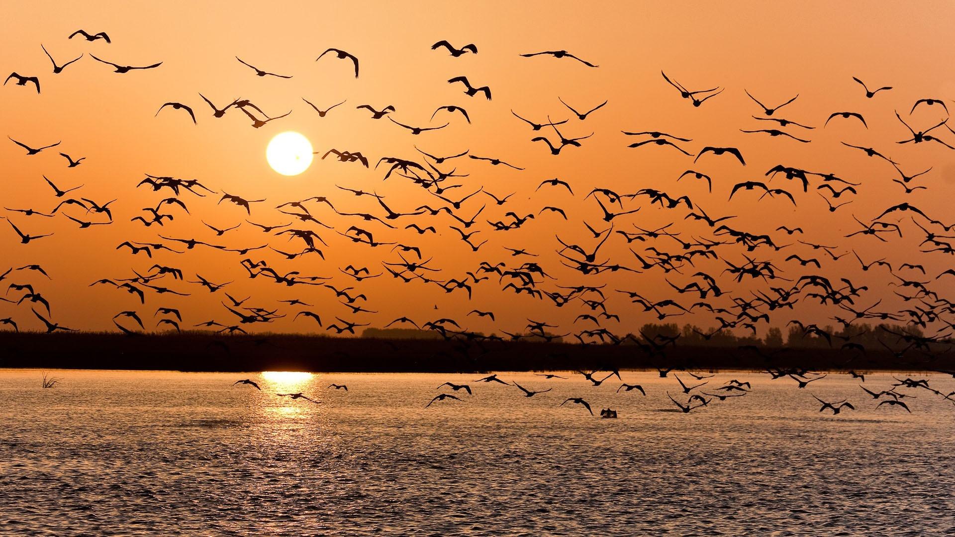 птицв на закате онлайн